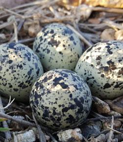Islas Atlánticas Galicia: Zona de Especial Protección para las Aves (ZEPA)