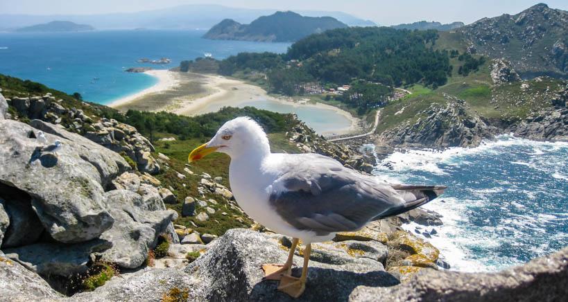 buceo en Parque Nacional de las Islas Atlánticas de Galicia