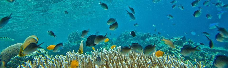 Islas Atlánticas de Galicia: animales submarinos