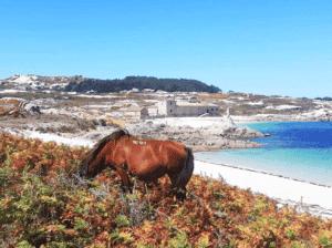 Fauna y flora en la Isla de Sálvora