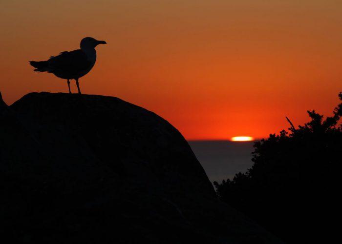 islas-cies-puesta-de-sol