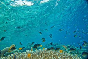 entorno subacuatico en cies